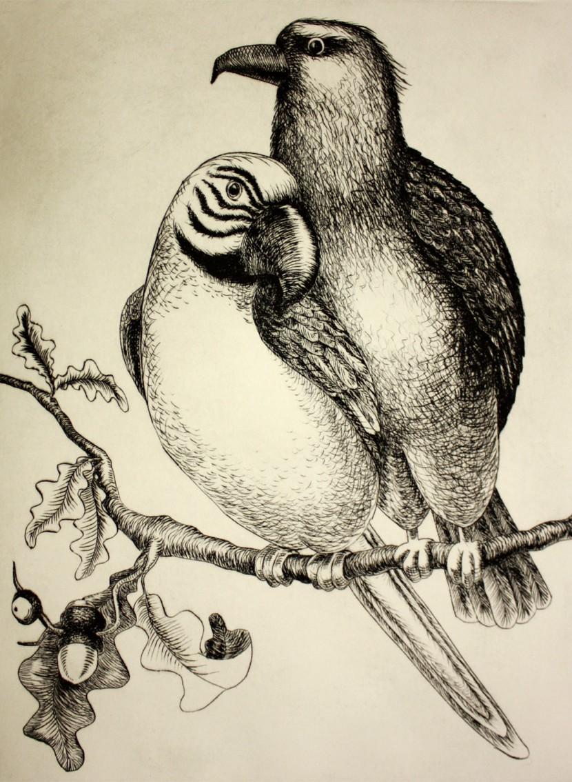 Ara und Adler 3/6, Kaltnadelradierung, 30 x 40 cm auf ca 40 x 50 cm Büttenpapier, 280 €