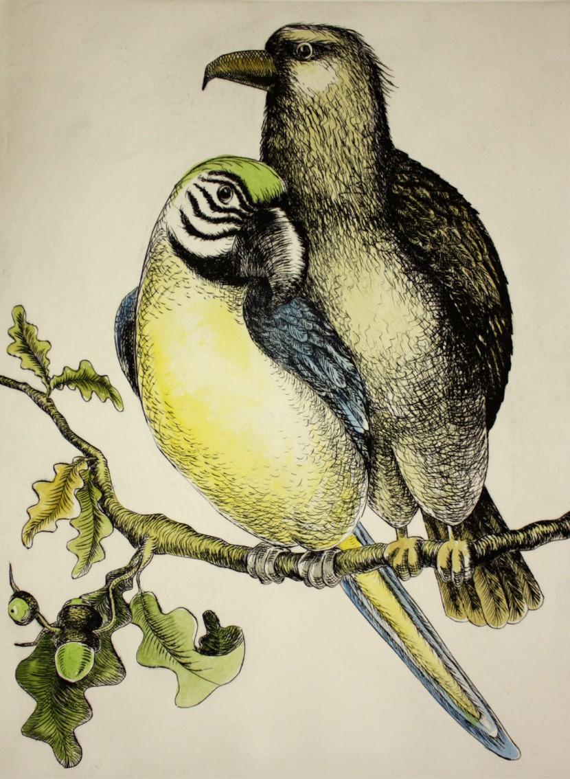 Ara und Adler 2/6, Kaltnadelradierung handcoloriert, 30 x 40 cm auf ca 40 x 50 cm Büttenpapier, 300 €