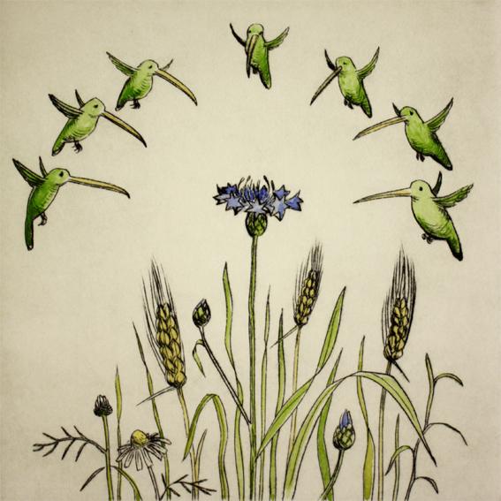Kornblume 3/20, Kaltnadelradierung handcoloriert, 20 x 20 cm auf ca. 26 x 39 cm Büttenpapier, 100 €